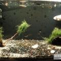 аквариум.jpg