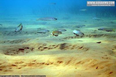 Озеро Танганьика в Африке - enan2-3.jpg