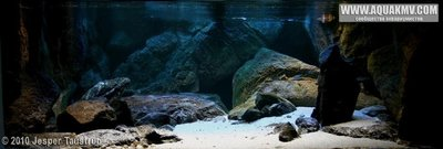 Темы для биотопных аквариумов Танганьики - 82.jpg.4919bf7c0a30b03980d08fb58f56d16c.jpg