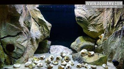 Темы для биотопных аквариумов Танганьики - 13131_611518375681107_2129018698871512625_n.jpg.f324d461890f2beb540cfa4e832cfa91.jpg