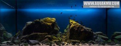 Темы для биотопных аквариумов Танганьики - 995385_10207527698485309_4648890681417772315_n.jpg.fb6d56cc7d23343235192d87955affee.jpg