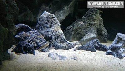 Темы для биотопных аквариумов Танганьики - IMAG0696.thumb.jpg.af4771c725c875038ff833f3f8ebdf66.jpg