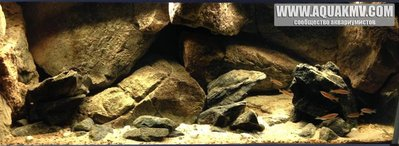 Темы для биотопных аквариумов Танганьики - 12974496_1101750076512777_3200790285131584852_n.jpg.351bda1653fbb63880eba2eb4337b19a.jpg