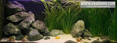 Темы для биотопных аквариумов Танганьики - 4ca443bf.jpg.b06ae59123c74931078664a0880d9a56.jpg