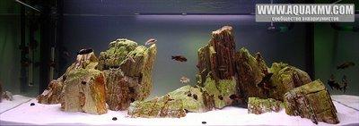 Темы для биотопных аквариумов Танганьики - 360LiterTanganjikaLake-vi.jpg.f42bd06575836770d03a6ed68ea05fe4.jpg