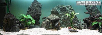 Темы для биотопных аквариумов Танганьики - akwariumWN.jpg.ec05e175f341f1f0ddf48329b058b350.jpg