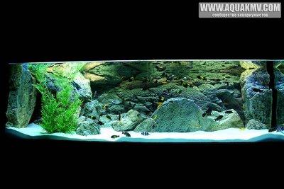 Темы для биотопных аквариумов Танганьики - Copyof4F3E1725.thumb.jpg.fc8b426c79ebfbc8af71f7bf3af6897c.jpg