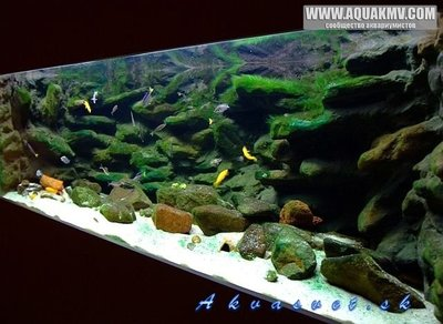 Темы для биотопных аквариумов Танганьики - 5727a3a90ef11_phoca_thumb_l_tanganyika395l30.jpg.fe1ac6aa8b3efea3fc038d85b8bfaddb.jpg