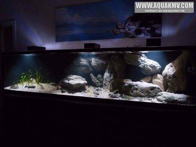 Темы для биотопных аквариумов Танганьики - 13244841_1073768892695273_6889410730215421036_n.jpg.51b7560fa90b52d8dd09b6b32a858bdb.jpg