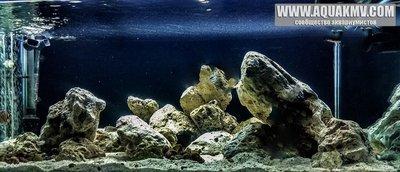 Темы для биотопных аквариумов Танганьики - 13319929_618853394947497_8673824363989958778_n.jpg.4fde26399796fd44494532b2df57a40b.jpg
