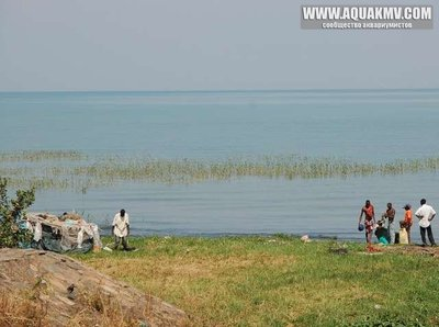 Bujumbura, Бурунди - medium.32481088.jpg.9a90f64bacf1712eb3bec3dada8af176.jpg