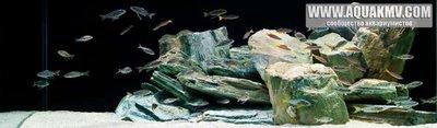 Темы для биотопных аквариумов Танганьики - slider.jpg.thumb.jpg.52bf0e14d62b1a78fa76676ae701678d.jpg