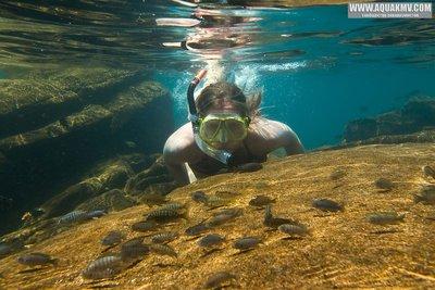 Биотопы Малави - Snorkeling. Lake Malawi-6990186c-8a99-4a4e-9c66-4598b0de8b01.jpg