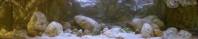 Темы для биотопных аквариумов Танганьики - 13418975_1094100637328765_6947581137745174421_n.jpg.f567c51dd4a2a4a055317de9d1ef9591.jpg