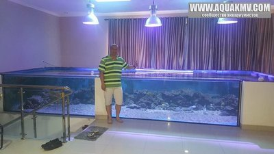 Темы для биотопных аквариумов Танганьики - 13427838_10153805102473212_8555869477829303063_n.jpg.ebedeac85976ff385aa676a6a38232b1.jpg