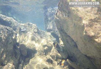 Озеро Танганьика в Африке - biotope-tanganyika-k.jpg