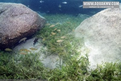Озеро Танганьика в Африке - sibwesa3.jpg