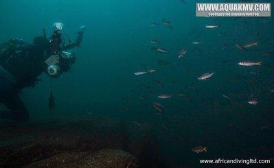 Озеро Танганьика в Африке - photographing_c_leptosoma_silaf.jpg