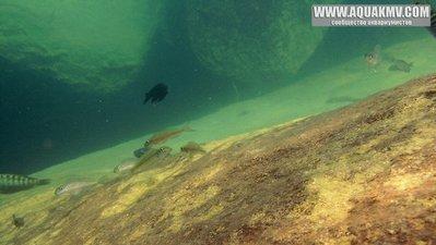 Озеро Танганьика в Африке - IMG_1519.JPG