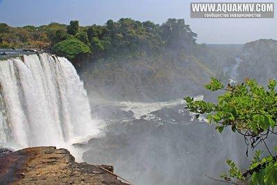 Озеро Танганьика в Африке - 555268_1418485905043297_1181139016_n.jpg.179e97ce7ba09a07498795862339b834.jpg