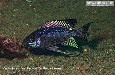 Озеро Танганьика в Африке - IMG_1850.JPG