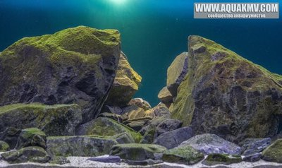 Темы для биотопных аквариумов Танганьики - 13344627_10208063799367496_3295210331953937547_n.jpg.2485ba655c9cdd255ce1a67b5bf0c277.jpg