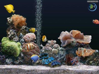 Аквас с рифом и без... - 1cfeb637680e.jpg