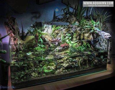 Просто пост красивых фото аквариумов. - 14718651_10154163965343212_933241096593171800_n.jpg