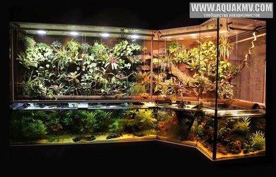 Просто пост красивых фото аквариумов. - 16406443_10154464513498212_1510775952912403719_n.jpg