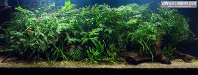 Просто пост красивых фото аквариумов. - user5644_pic232077_1469302110.jpg