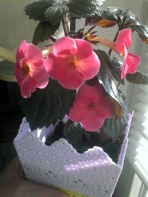 Ещё одна страсть - комнатные цветы  - IMG_2647.JPG