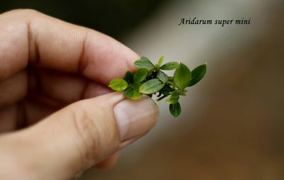 aridarum mini - 2  - 22199361_10209540270577397_429653074_o.jpg