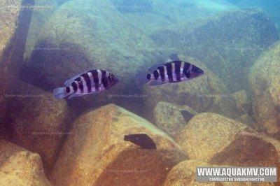 Озеро Танганьика в Африке - IMG_2604.JPG