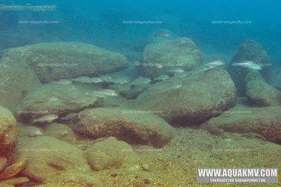 Озеро Танганьика в Африке - IMG_2607.JPG