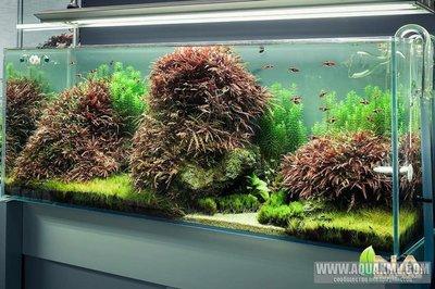 Просто пост красивых фото аквариумов. - anb9kOTLvvE.jpg