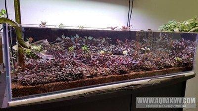Просто пост красивых фото аквариумов. - WuqnvjVaYVk.jpg