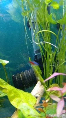Забор воды в аквариуме - IMG_20181125_092932_2.jpg