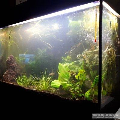 Мои аквариумы г.Ставрополь - nqDJPH9rjCk[1].jpg