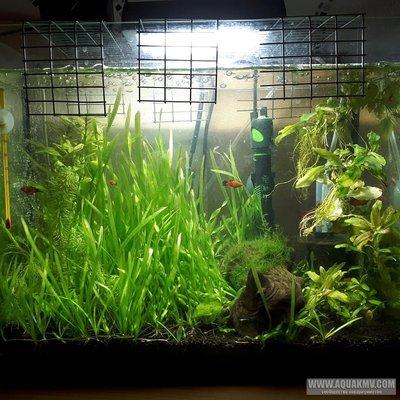 Мои аквариумы г.Ставрополь - JcwGk1qO854[1].jpg
