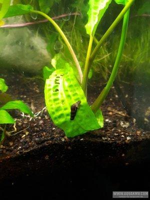 Мои аквариумы г.Ставрополь - mfwm2tIWpG0[1].jpg