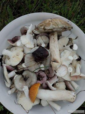 Грибы грибочки... - P90722-175219.jpg