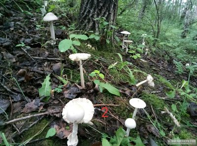 Грибы грибочки... - P90722-173332(1).jpg