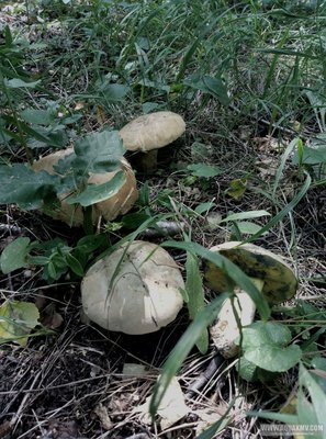Грибы грибочки... - P90715-120933.jpg