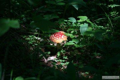 Грибы грибочки... - IMG_7193.JPG