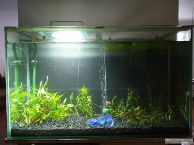 Мой первый аквариум на 300л Ktyf  - IMG_20200209_160252.jpg