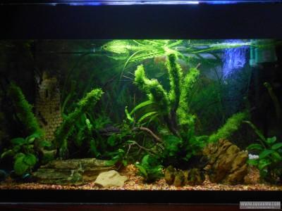 тот же аквариум