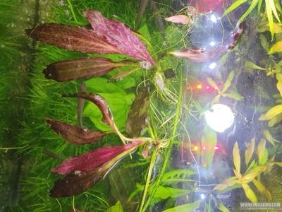 Растения от ANALOG - 20200830_153123.jpg