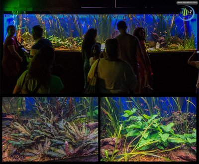 Antalya Aquarium - freshwater.jpg