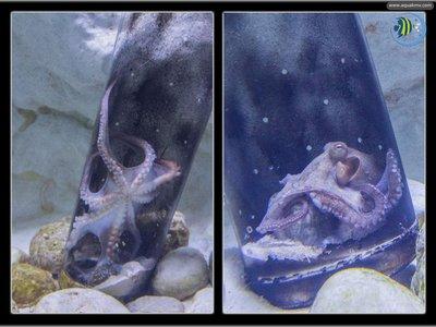 Antalya Aquarium - oct.jpg