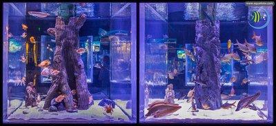 Antalya Aquarium - double.jpg